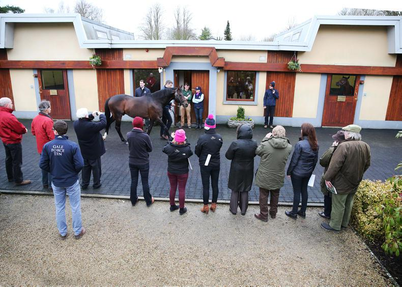 NEWS: Save the date - the ITM Stallion Trail is back
