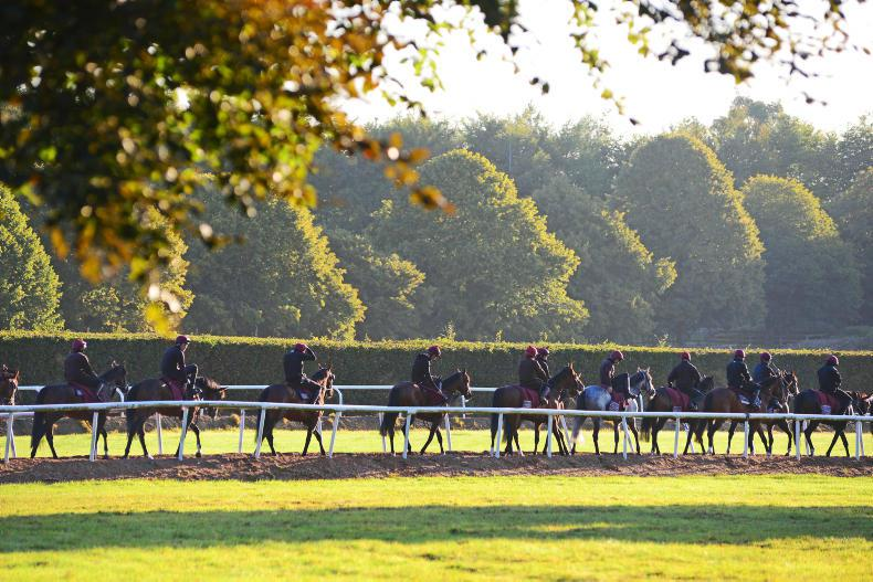 PARROT MOUTH: Ballydoyle trip up for grabs