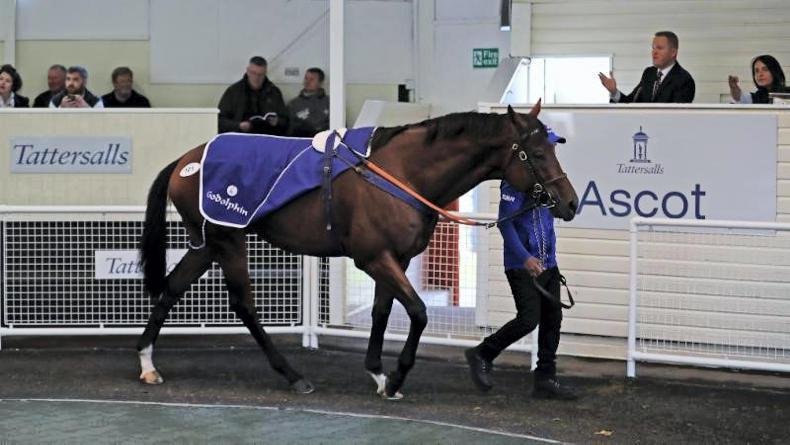 TATERSALLS ASCOT SALE: Zeelander tops trade at Ascot