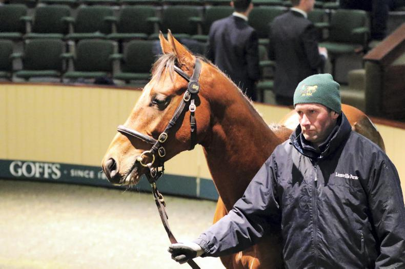 GOFFS AUTUMN YEARLING SALE: Tough times at the bottom end