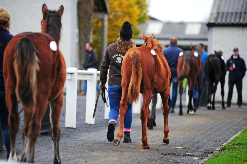 Figures down on first day of foals, but pivotal sessions still to come