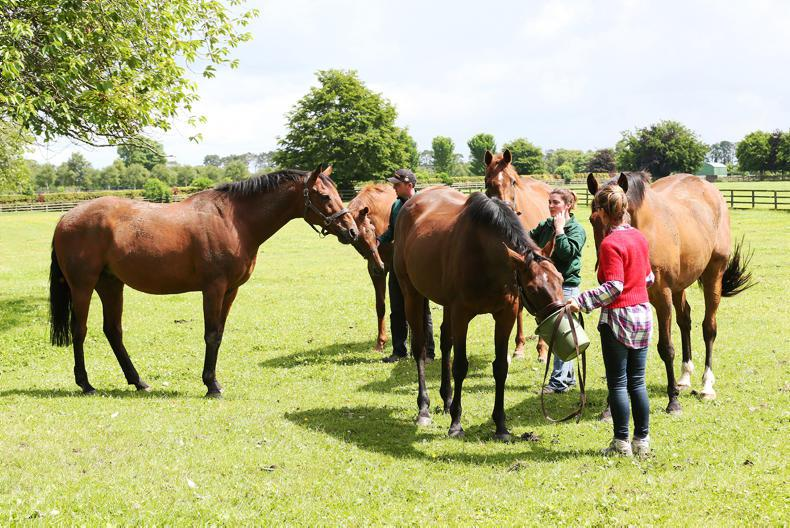 ITBA: Your first step to a career in thoroughbreds
