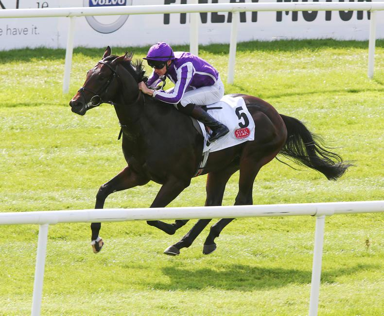 BREEDING INSIGHTS: Sires to use if you want to breed a winner