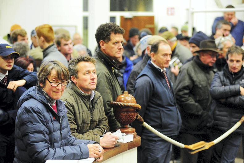 TATTERSALLS IRE NH FOAL SALE: Top ticks the boxes but bottom struggles