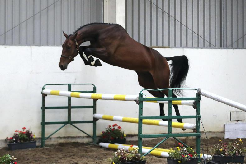 GO FOR GOLD SALE: OBOS Quality three-year-old tops elite sale at €59,000