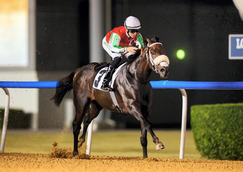 UAE: Curtis rides sixth winner of season