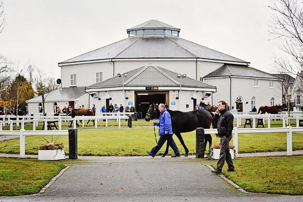 Simon Kerins: First chance to see future Cheltenham winners in the sales ring