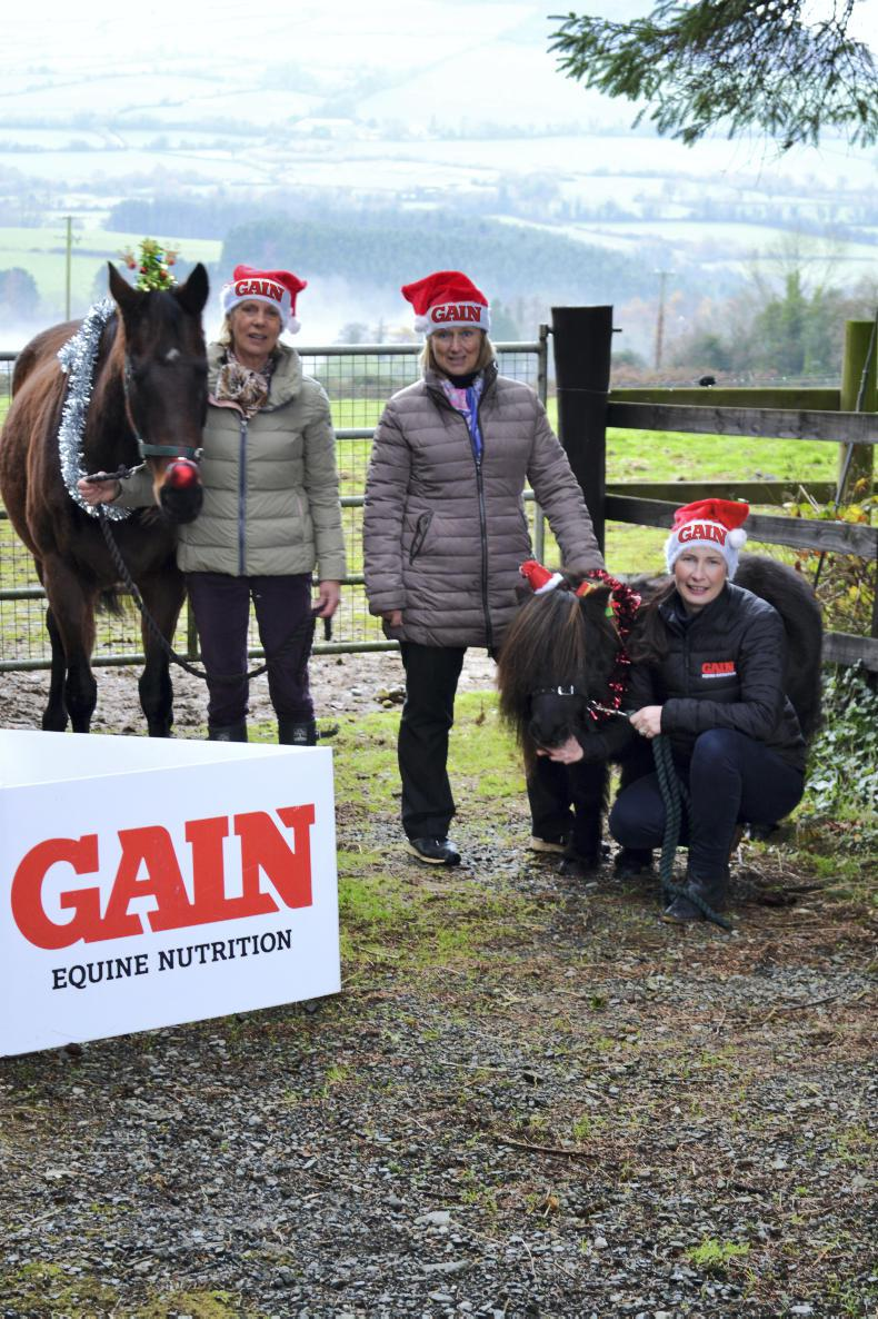 PONY TALES:  Get festive to help horses this Christmas!