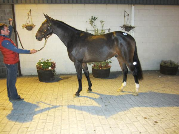 Sale-topper breeding unveiled