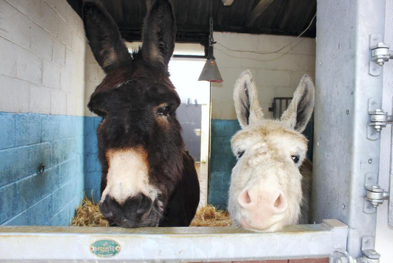 IRISH EQUINE VETERINARY CONFERENCE: Approaching the dull donkey
