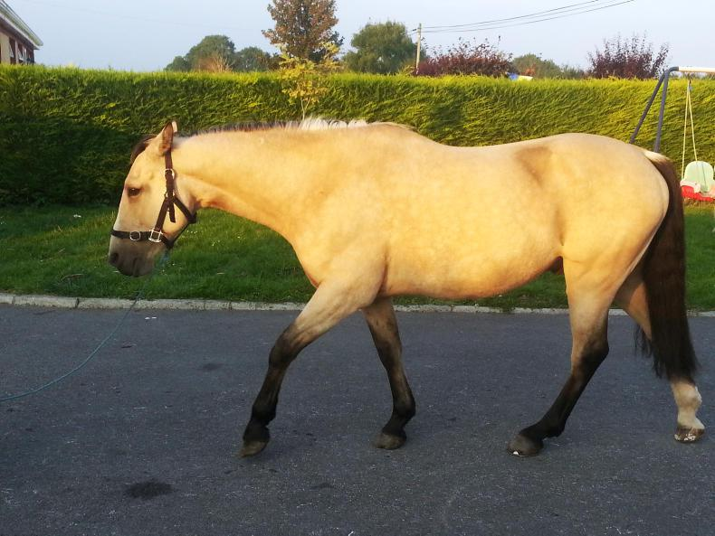 IRISH EQUINE VETERINARY CONFERENCE:  Sizing up colic cases