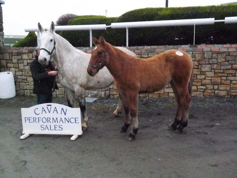 CAVAN SALES: Clearance rate up at Cavan finale