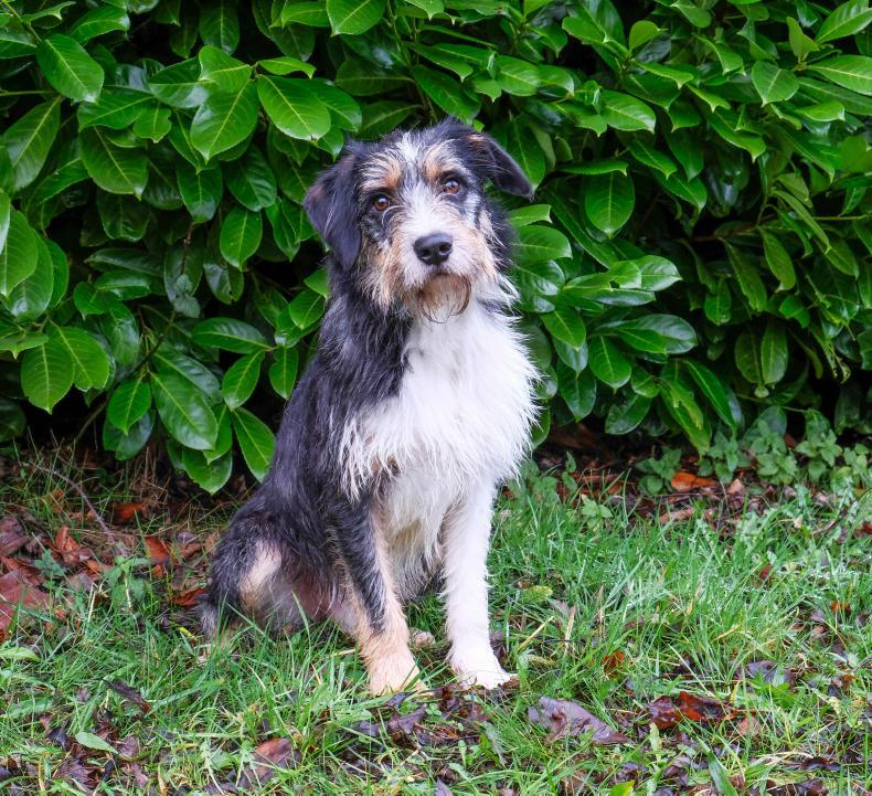NEWS:  ISPCA looking for kind home for this dog