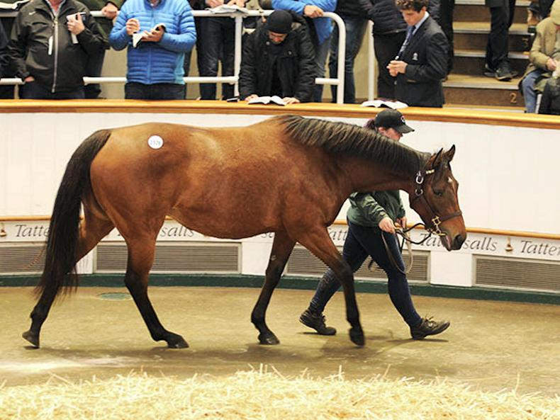 Juddmonte draft leads the way on opening day of Tattersalls December Mare Sale