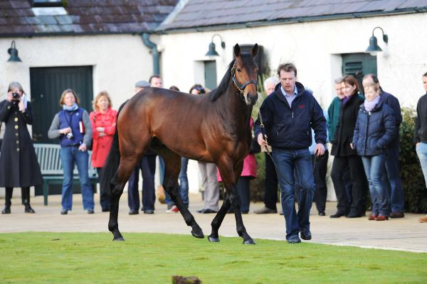Sea The Stars gets fee hike to €125,000 at Gilltown Stud