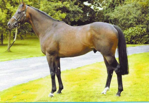 Frankel half-brother Morpheus to Tally Ho Stud