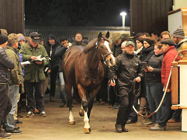 VIDEO: Decorated Knight's dam Pearling sold for 2,400,000gns