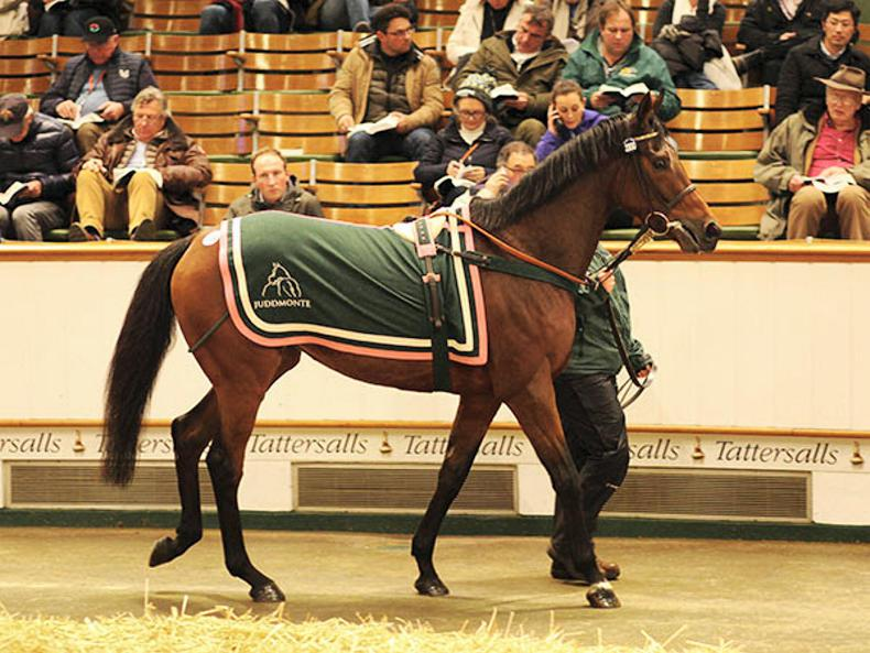 VIDEO: Juddmonte draft popular again at Tattersalls December Mare Sale