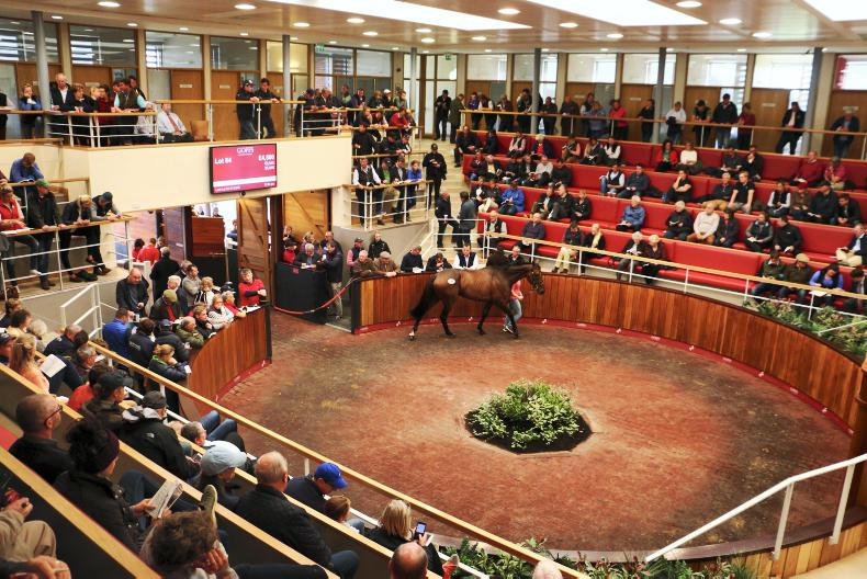 Winning chaser sold for £21,000