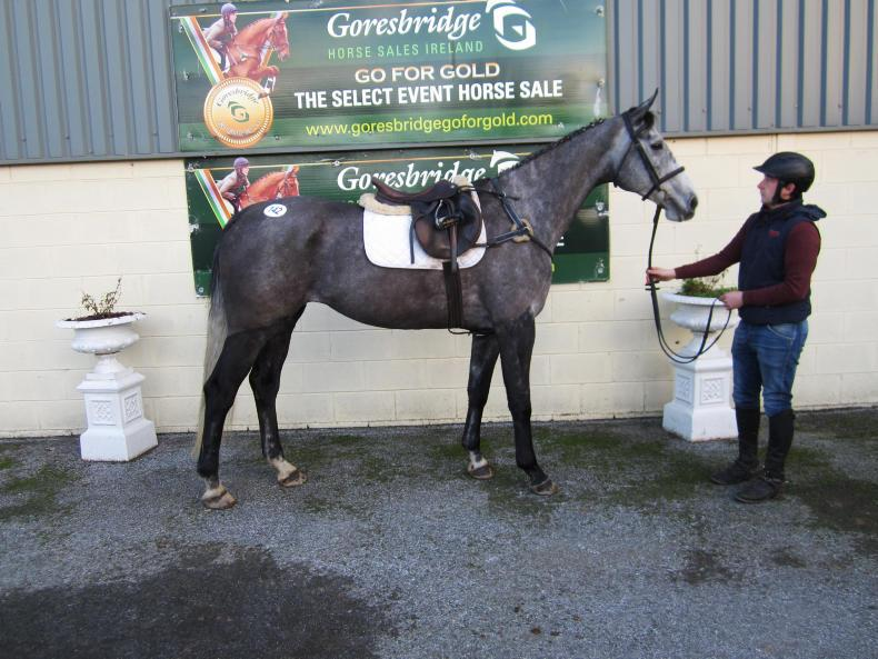 GORESBRIDGE SALES: Steady trade returns top price of €6,700