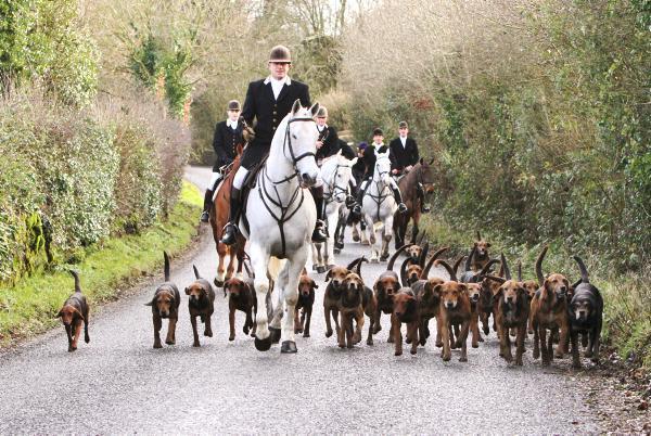 Scarteen Foxhounds: Star of the season