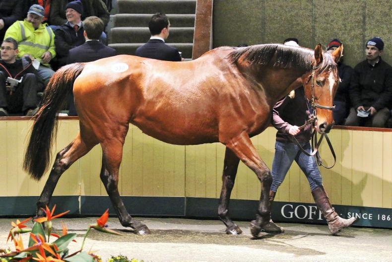 Whistle Dixie tops strong two-day trade at Goffs