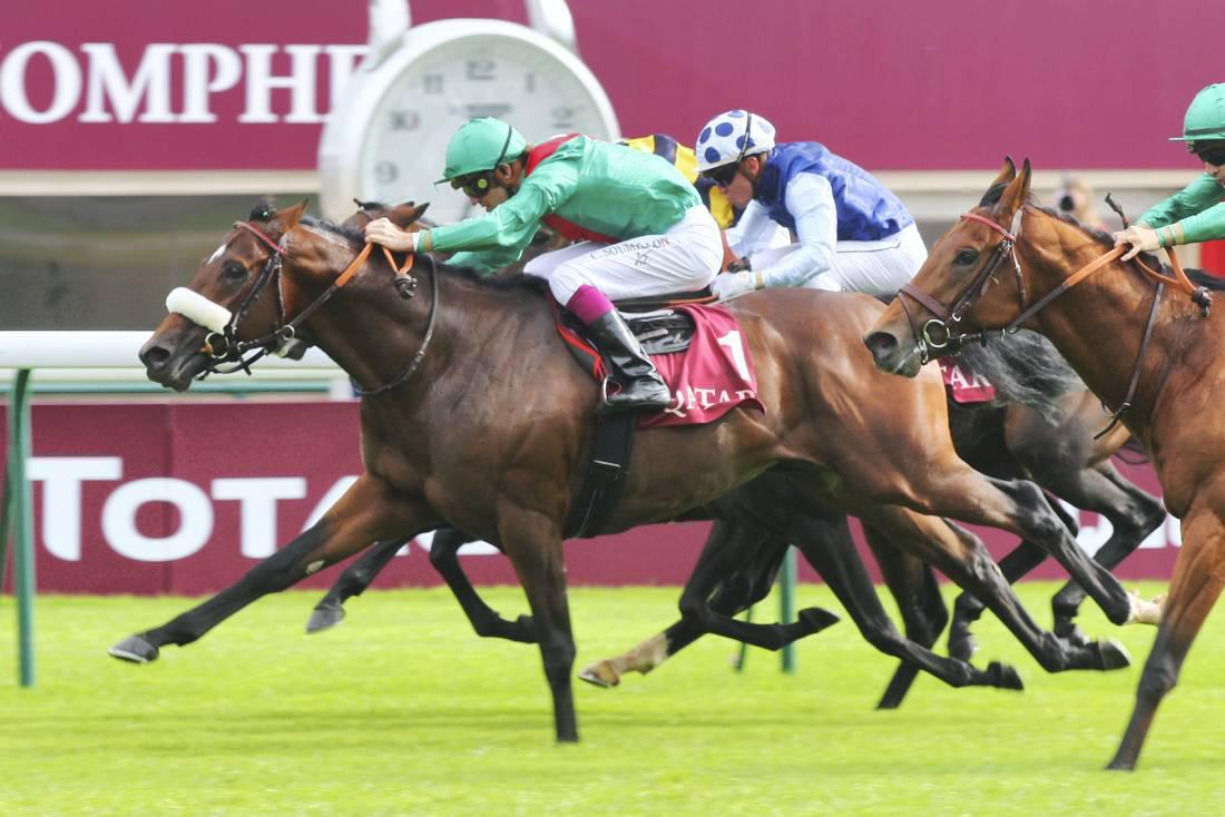 New stallion for Ronnie O'Neill's Whytemount Stud