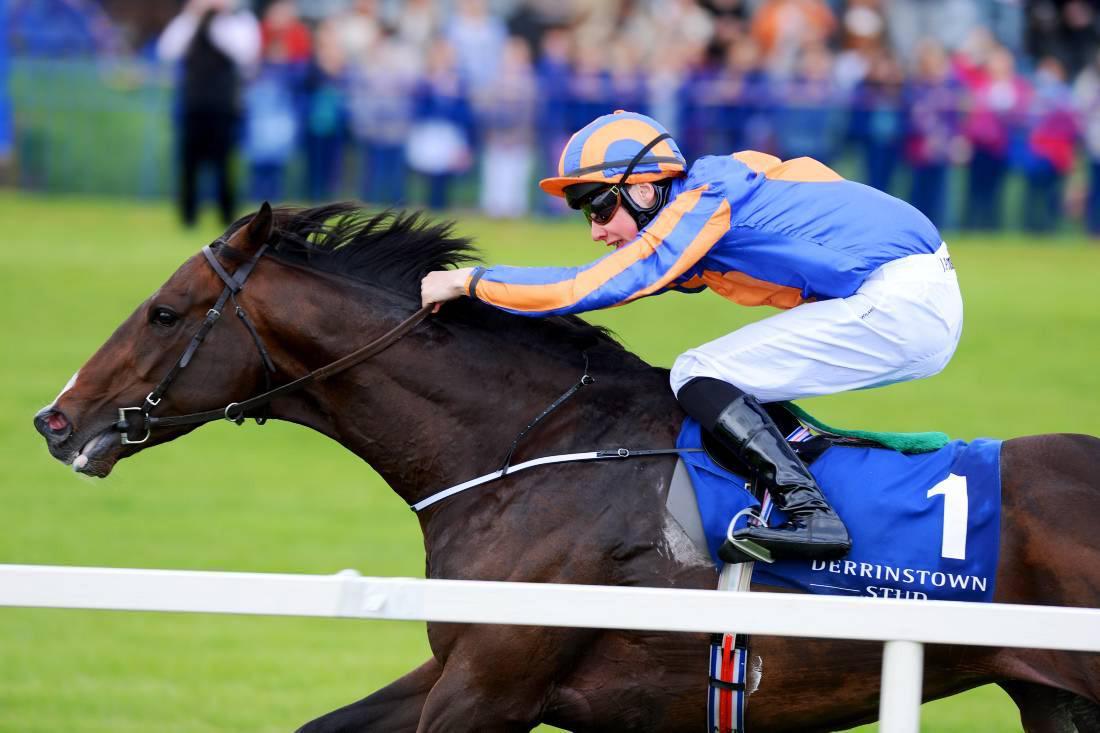 Ballyhane Stud to stand Battle Of Marengo