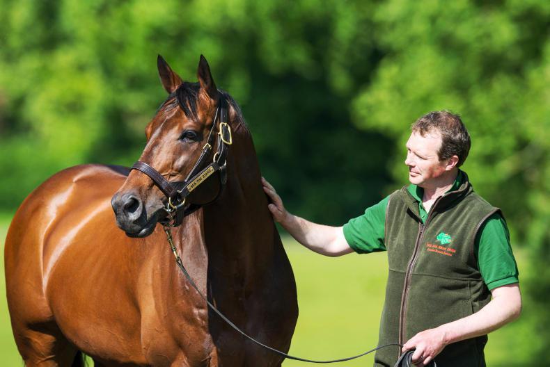 ITM IRISH STALLION TRAIL: Meet the stallion handlers