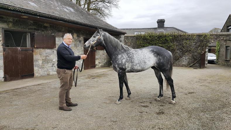 ITM IRISH STALLION TRAIL: Five stallion masters talk about the business
