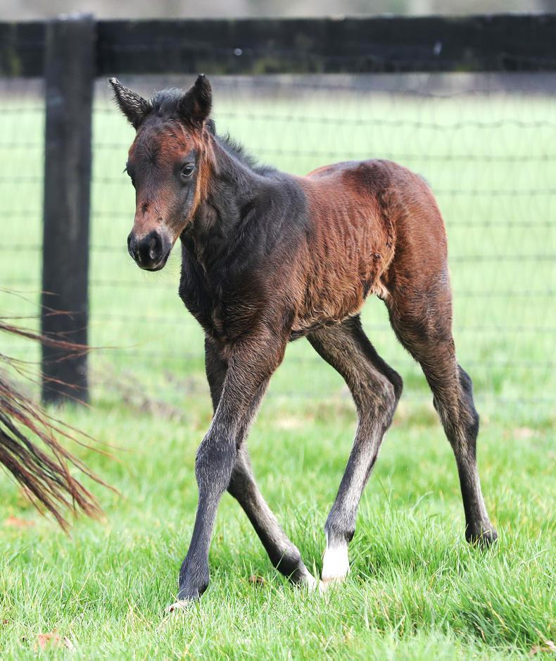 BREEDING INSIGHTS: El Kabeir strikes early with a colt