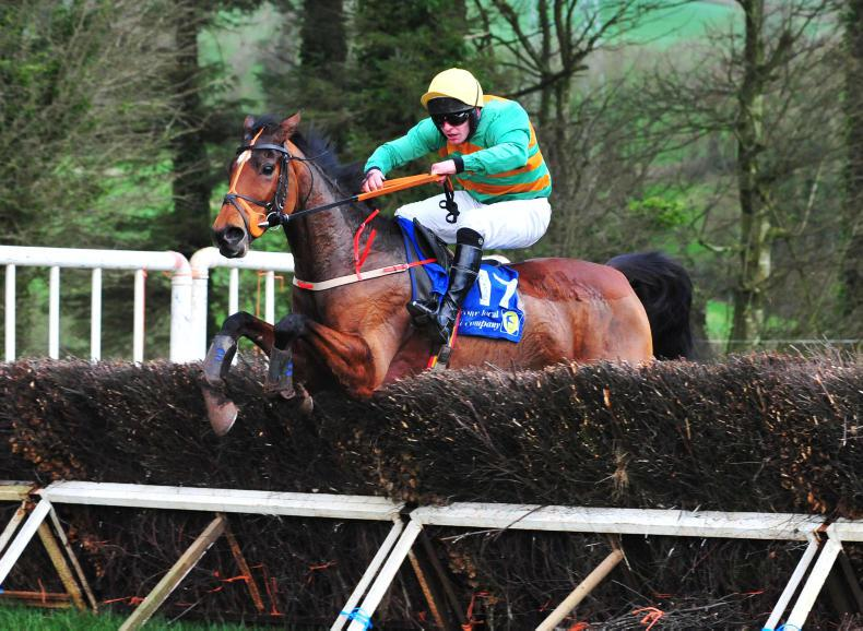 MUSKERRY FOXHOUNDS: AGHABULLOGUE SUNDAY: Presentandcounting makes his mark