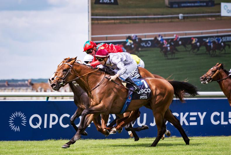 TATTERSALLS UK: FEBUARY SALE PREVIEW: A nice selection on offer at Newmarket