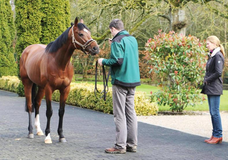 NEWS: The Irish National Stud off a unique opportunity