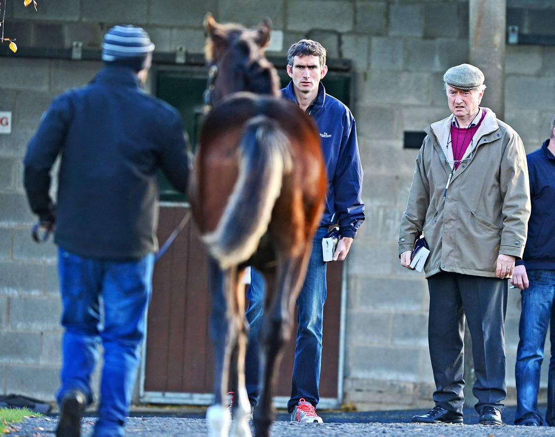 Michael Moore:  Value to be found at top end of National Hunt foal market