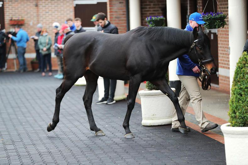 SIRE REVIEWS: Standing at Kildangan Stud : Slade Power