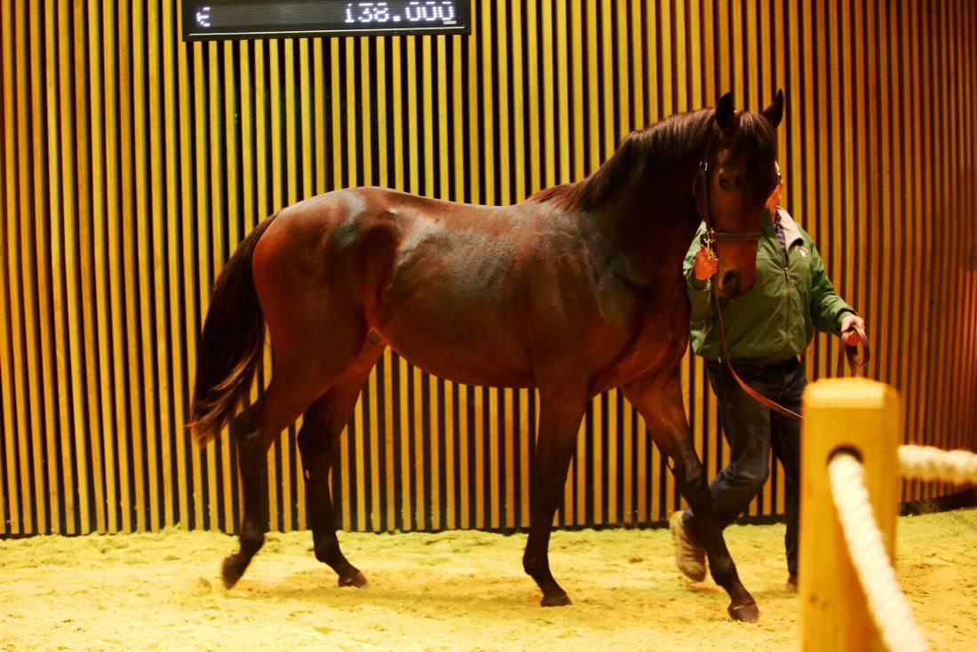 Jonjo O'Neill spends plenty at Arqana Autumn Sale