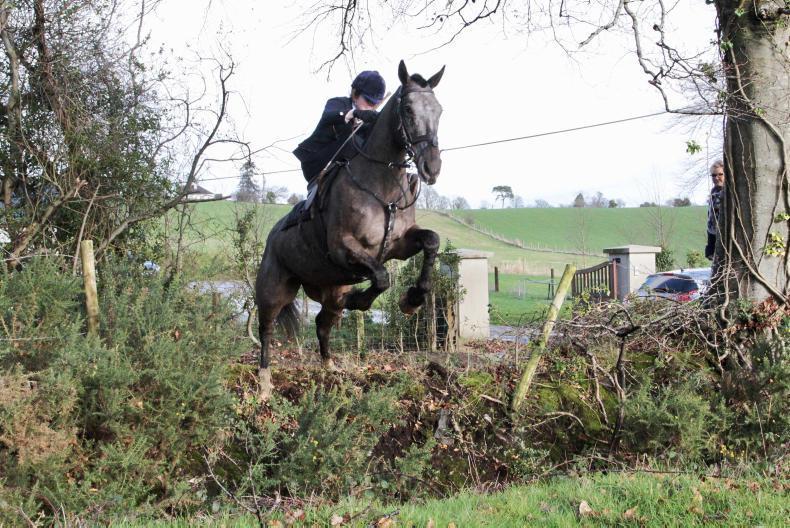 IRISH HORSE WORLD FIXTURES, FEBRUARY 2nd 2019