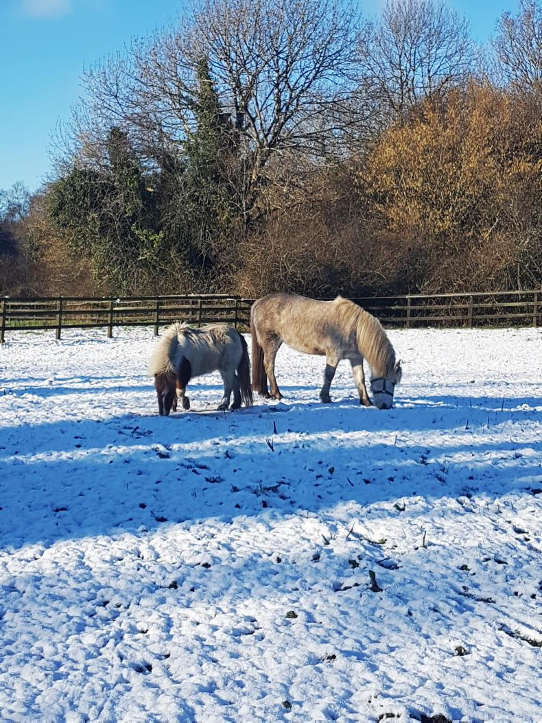 NEWS:  ISPCA issues cold weather advice