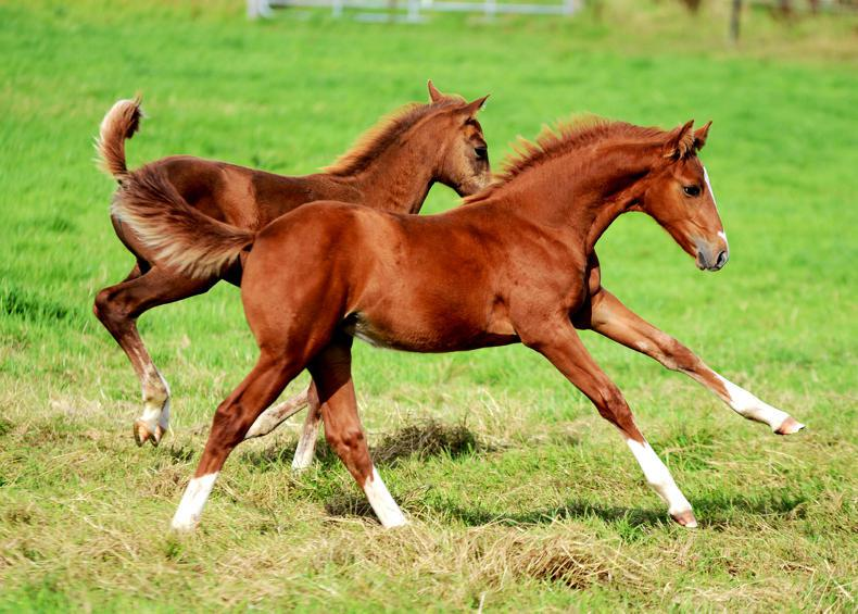 FOALING FEATURE 2019: Worming of foals and weanlings