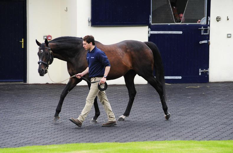 SIRE REVIEWS: Standing at Coolmore Stud : Camelot