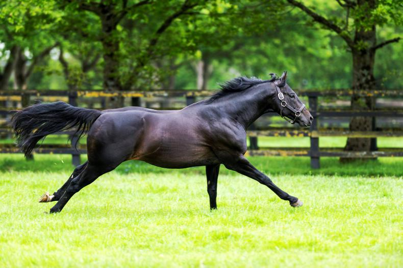 SIRE REVIEWS: Standing at Irish National Stud : Elusive Pimpernel