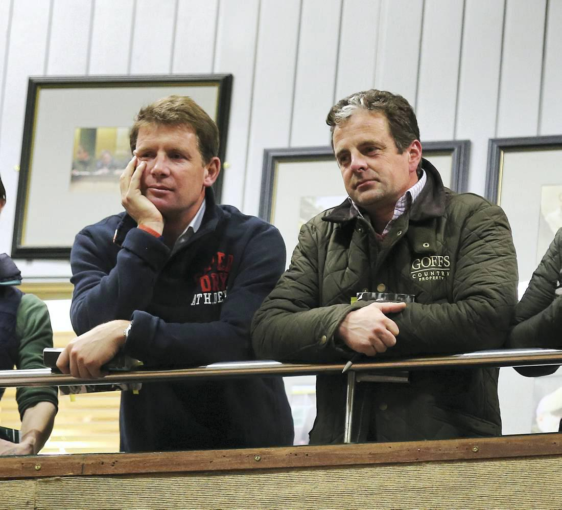 Sensational, amazing, historic foal sale at Goffs