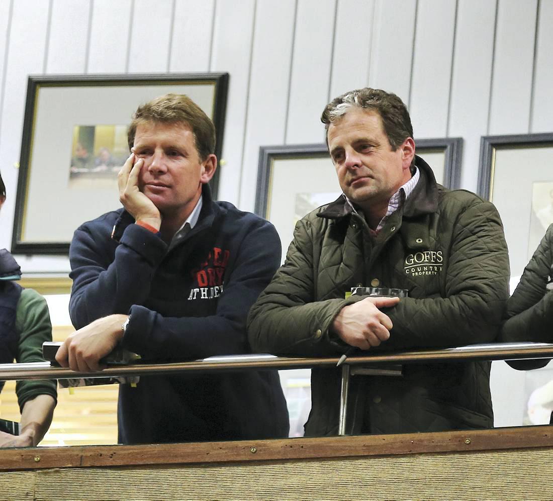 Sensational, amazing, historic foal sale at Goffs