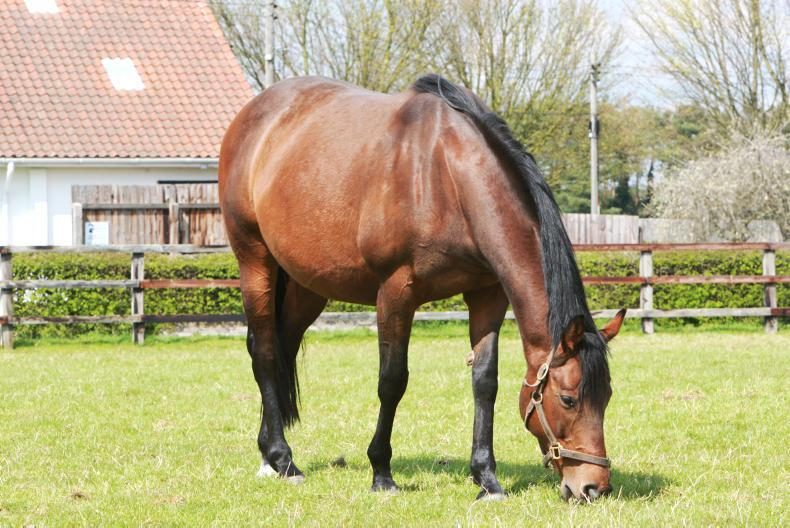 FOALING FEATURE 2019: Minding your mare ahead of foaling