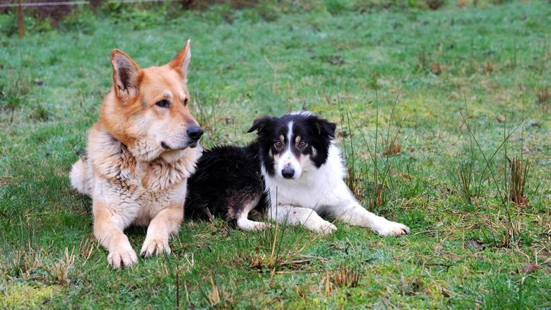 NEWS:  ISPCA - these two great pals need a kind home