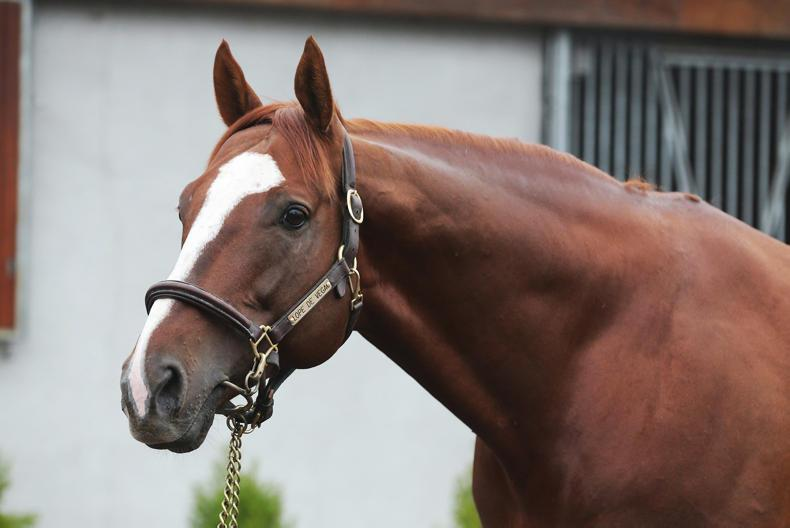 SIRE REVIEWS: Standing at Ballylinch Stud : Lope De Vega