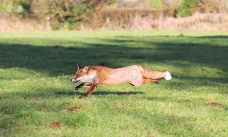 NEWS IN BRIEF:  Injured Hunt Staff fundraiser