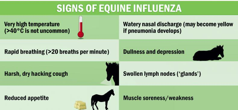 EQUINE FLU: What are the signs and how should you deal with a suspected case?