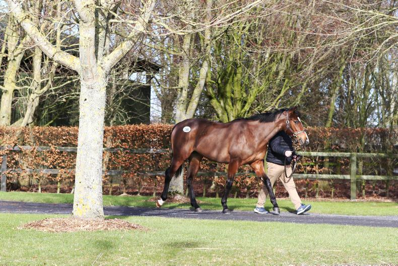 GOFFS FEB SALE: A satisfactory start to the new season